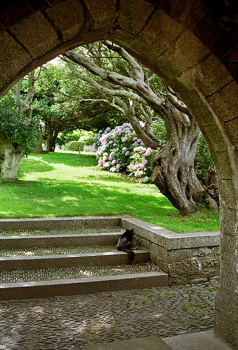 St michael s mount gardens cornwall england 2 of 19 for Garden trees england