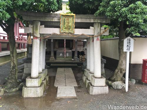 kawasakidaishi (6 von 28)