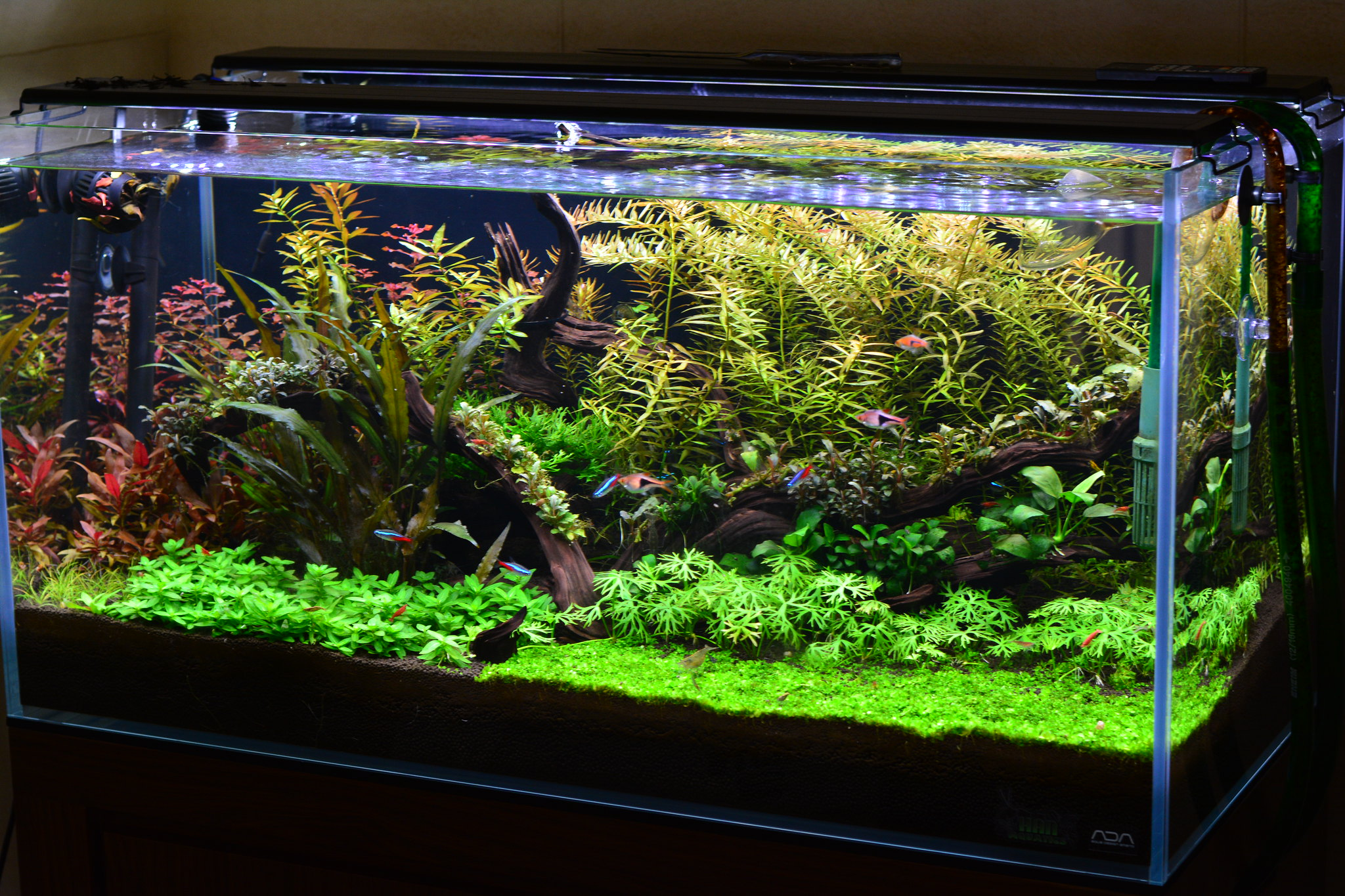 48 gallon low tech the planted tank forum. Black Bedroom Furniture Sets. Home Design Ideas