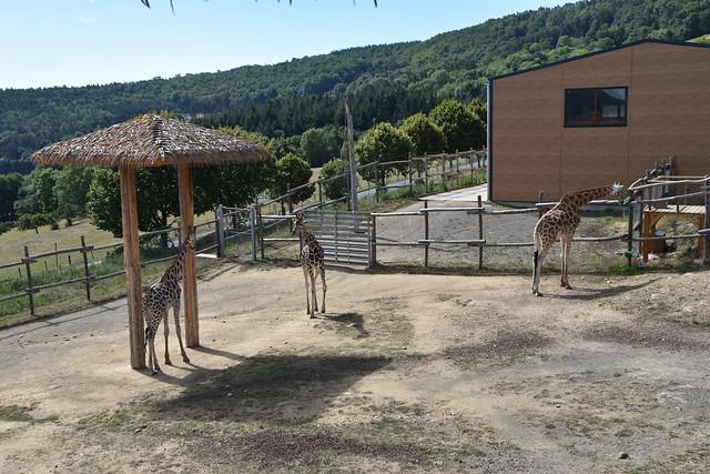 Parc Animalier du2019Auvergne/II - knutisweekly.com