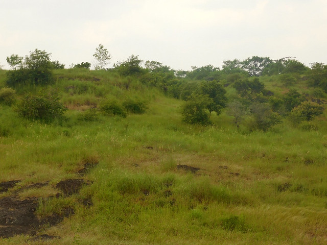हरियाली की चादर ओढ़ी रुपापाड़ा गाँव की पहाड़ी