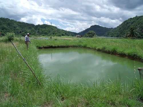 Aquaculture ponds in Ghana. Photo by Curtis Lind, 2009.