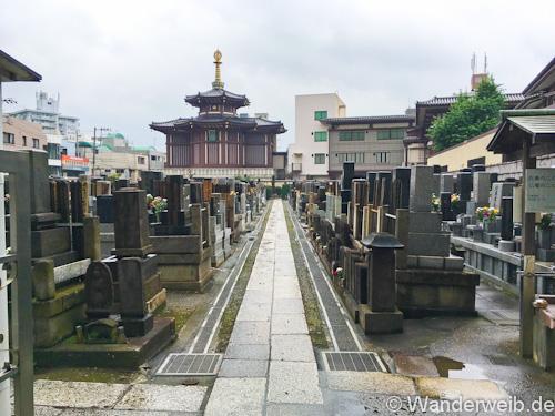 kawasakidaishi (5 von 28)
