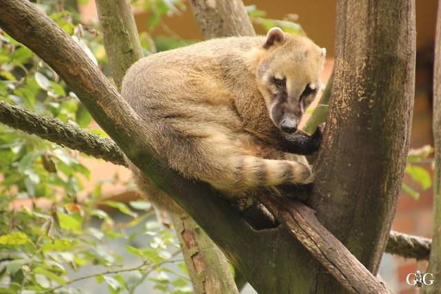 Zoo Rostock 2. Teil 20.08.201633