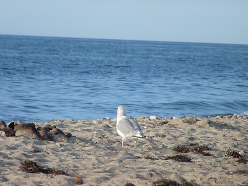 Gull watching