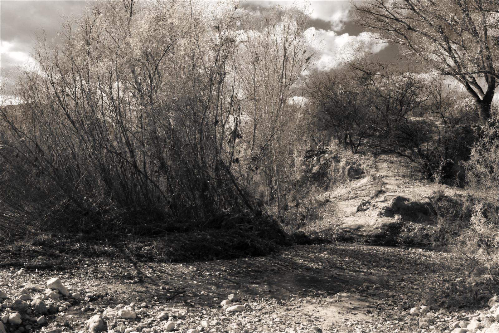 deadhorsecreekandtrail