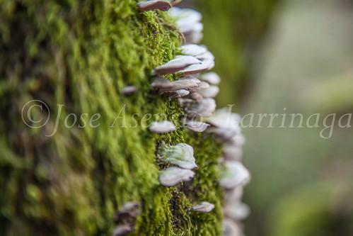 Parque Natural de #Gorbeia #DePaseoConLarri #Flickr      -1426