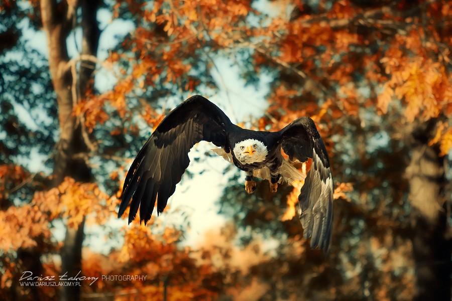 Автор фото: Dariusz Lakomy - ПоЗиТиФфЧиК - сайт позитивного настроения!