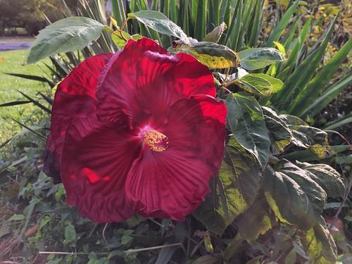 Garden Bloggers' Bloom Day: October 2016