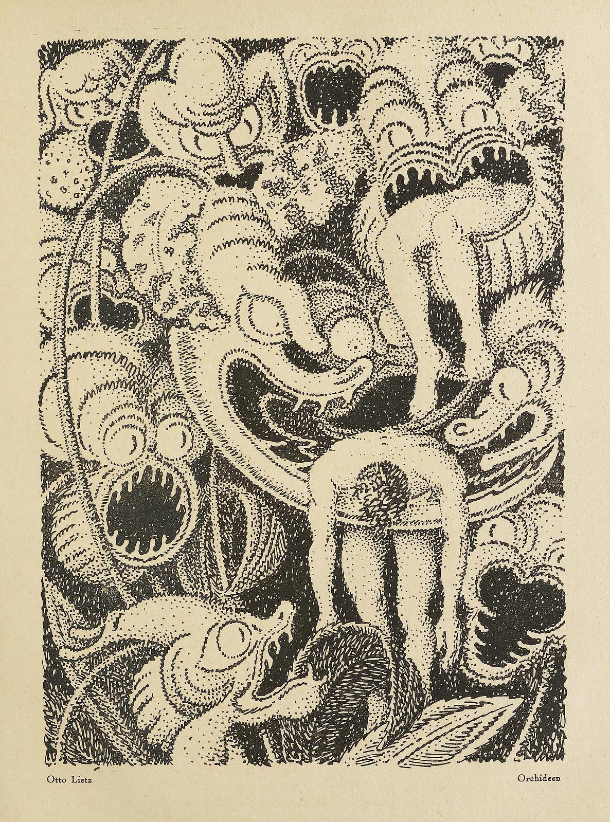 Der Orchideengarten - 1919, Otto Lietz - Orchideen