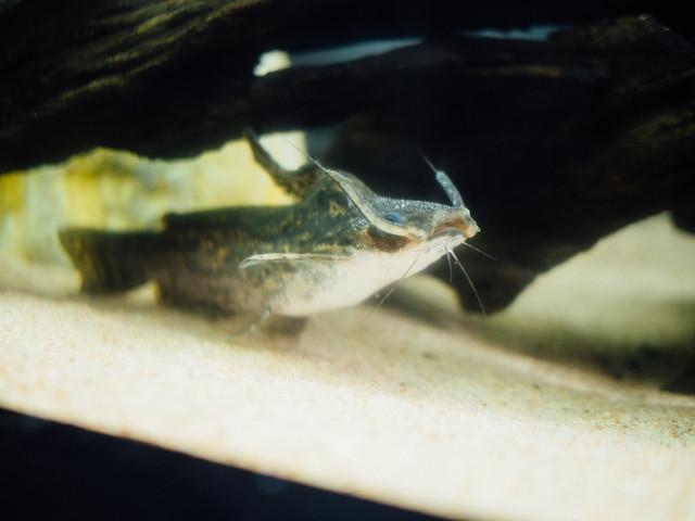 160810_takeshima_aquarium-5