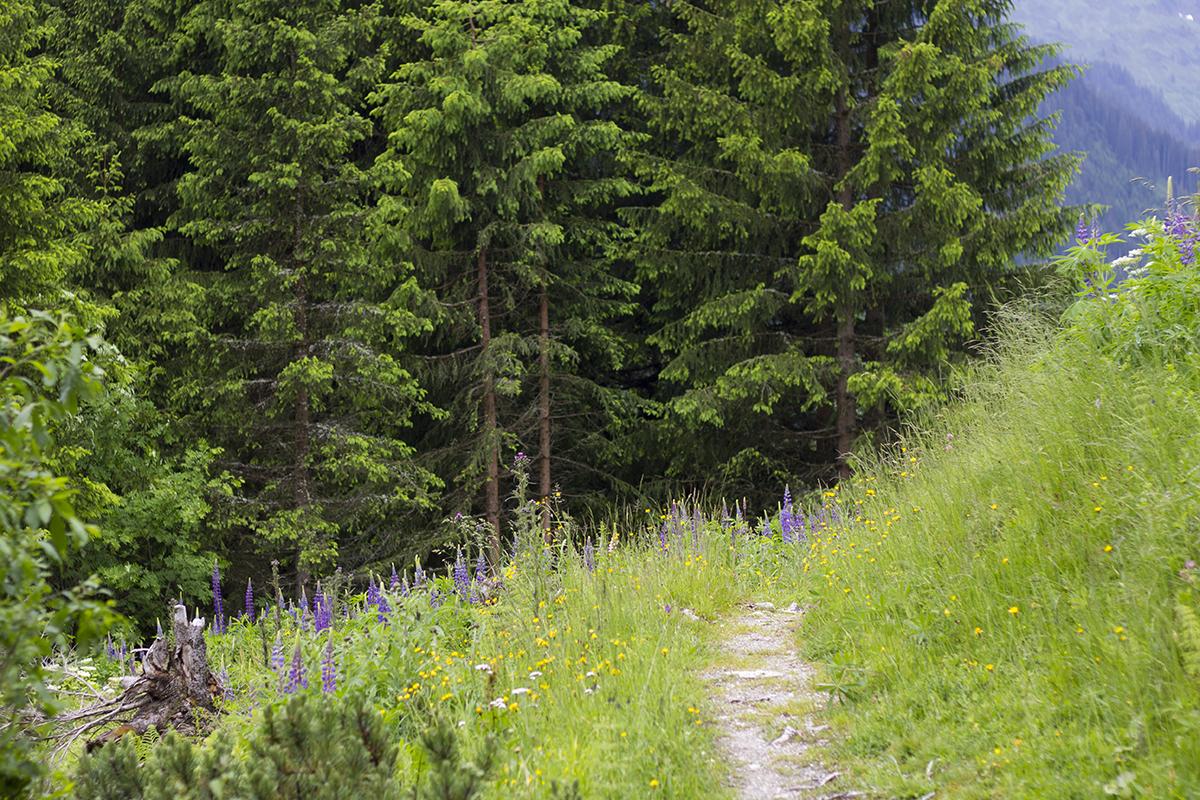 austrian-hike-st-anton-summer