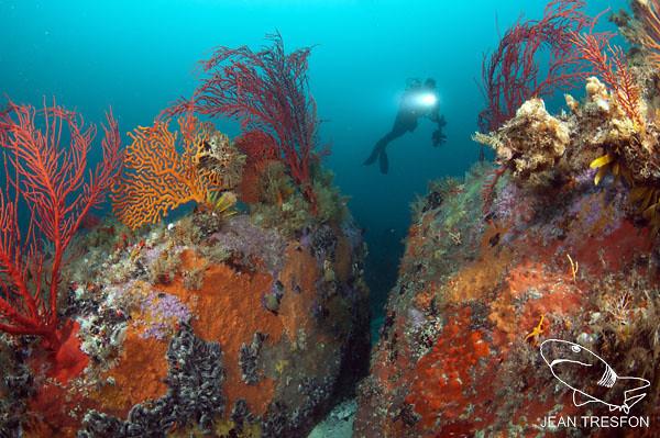 Atlantis (4)