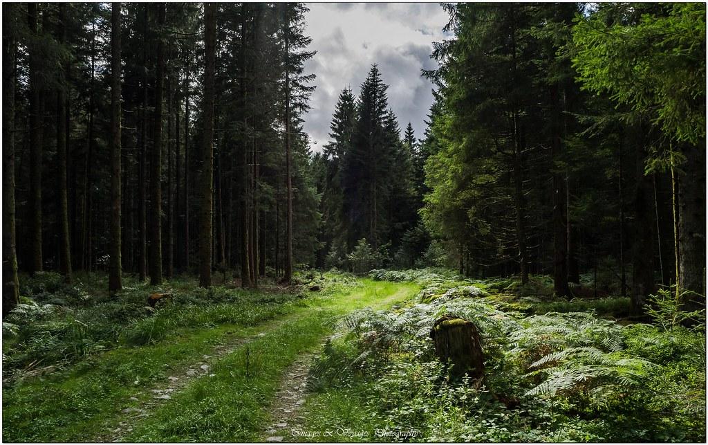 Promenons nous dans les bois ... + Ajouts ... 28531432684_5ceaf6872a_b