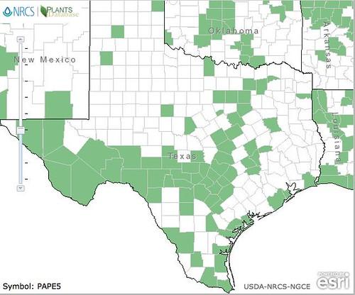 CucumberWeedMap_TX