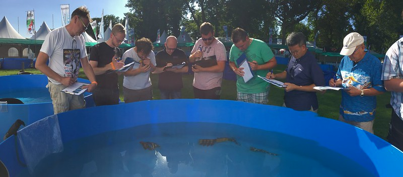 ZNA open Judge Seminar HKS2016. Fish provided by Jeroen van Keulen.
