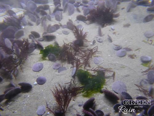 160703f Monterey Bay Habitats _08