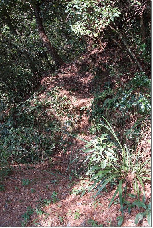 豐林口山登山路徑 5