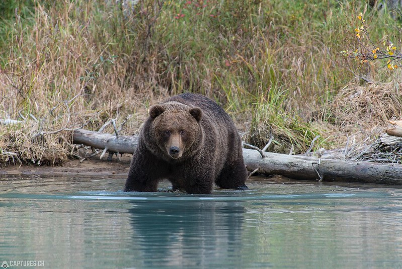 The big one in the water - Lake Clark National Park
