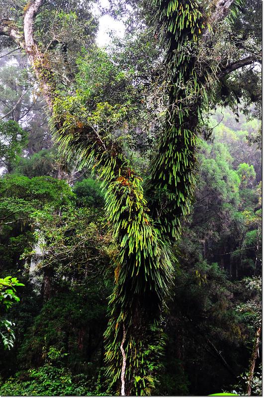 忘憂森林的綠 (2)