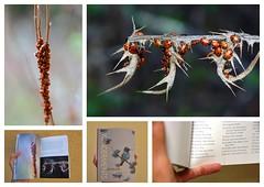 My Ladybug Photos in Heyday Wonderments Book Photo Collage