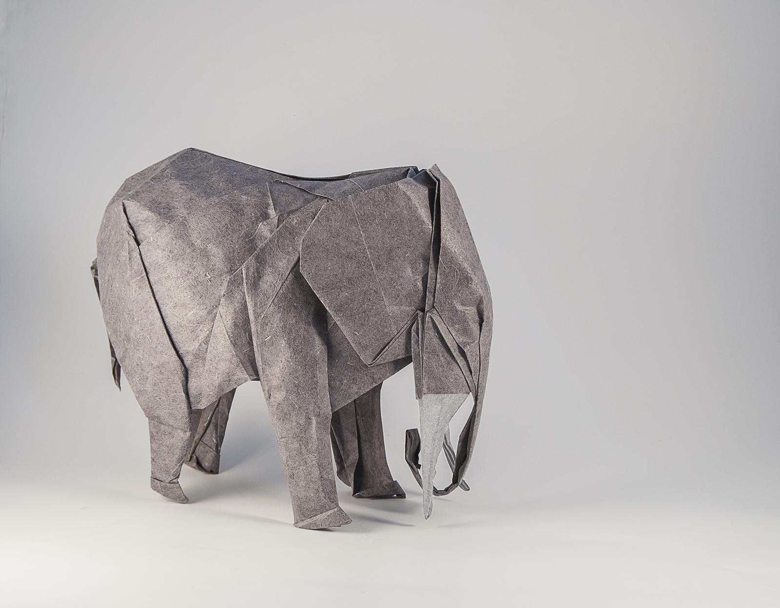 Elefante Artur Biernacki
