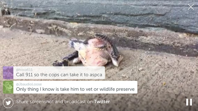 Periscope viewers come to aid of baby sparrow
