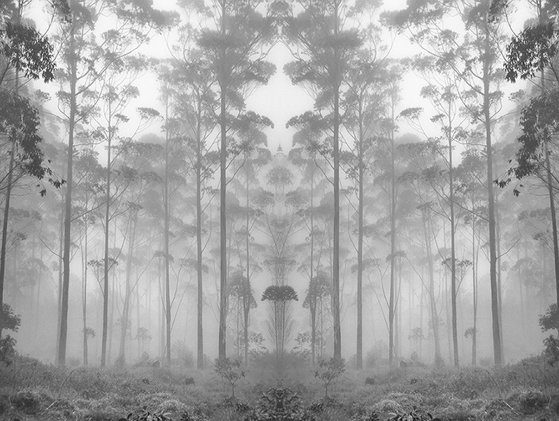 Botanical Garden | by Hengki Koentjoro