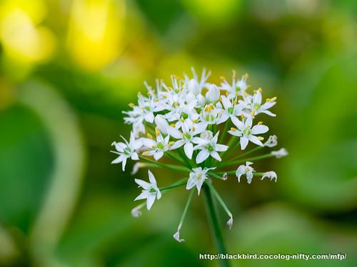 Flowers #04