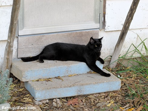 (24-8) Mr. Midnight relaxing on the steps of The  Shack (where he and Kit Kat still live) - FarmgirlFare.com | by Farmgirl Susan