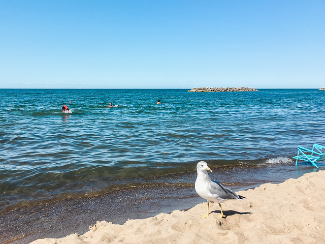 Gull hanging out at Beach 7 in Presque Isle State Park.