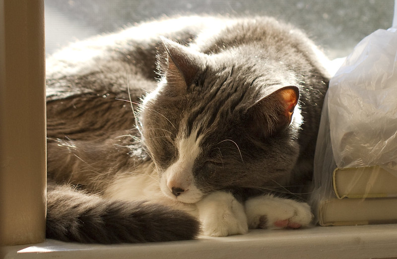 Sleepy Zeph