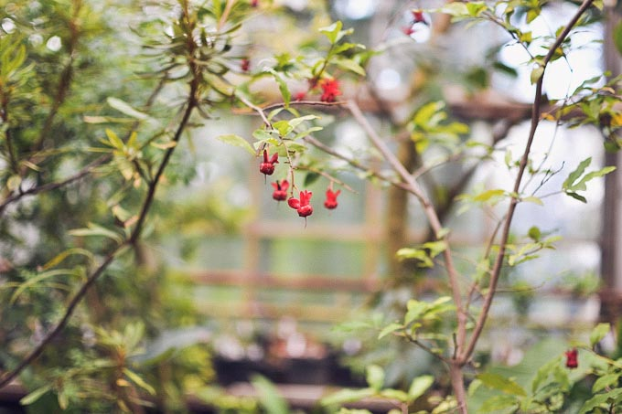 botanic_garden_midi_dress-10