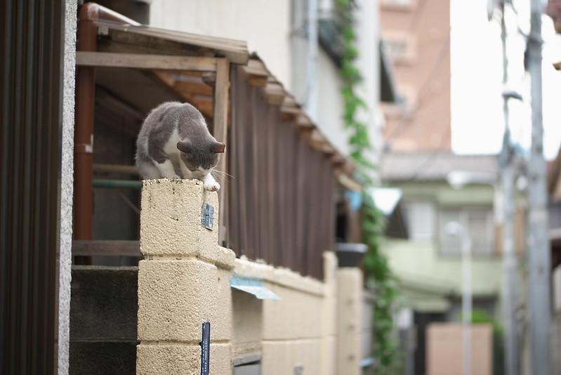 東京路地裏散歩 ネコ 2016年8月21日