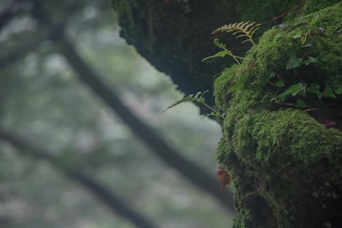 Parque Natural de #Gorbeia #DePaseoConLarri #Flickr - -861