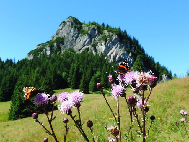 Life in the forest: Little Fatra, Slovakia