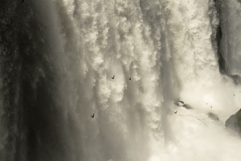 Vencejos en Cataratas de Iguazu