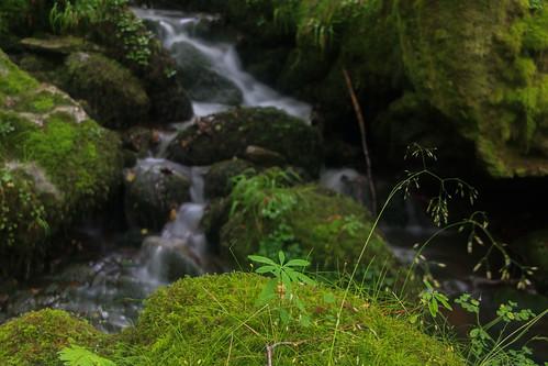 Parque Natural de #Gorbeia #DePaseoConLarri #Flickr - -904