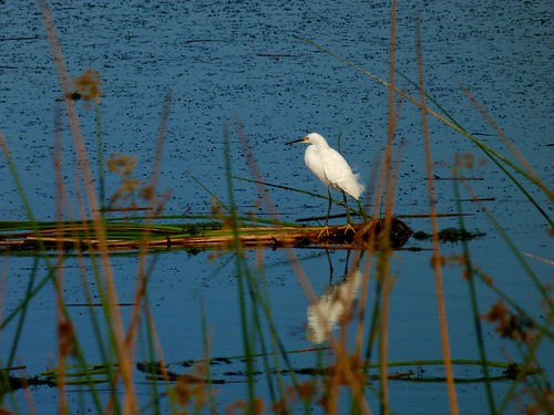 The Rusty Egret Bed And Breakfast