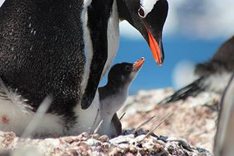 Aerovías DAP pingüinos Antártida (DAP)