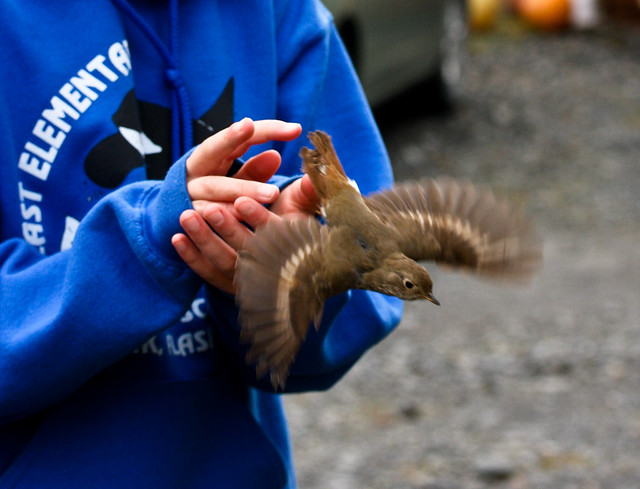 Kodiak National Wildlife Refuge Volunteer banding a bird