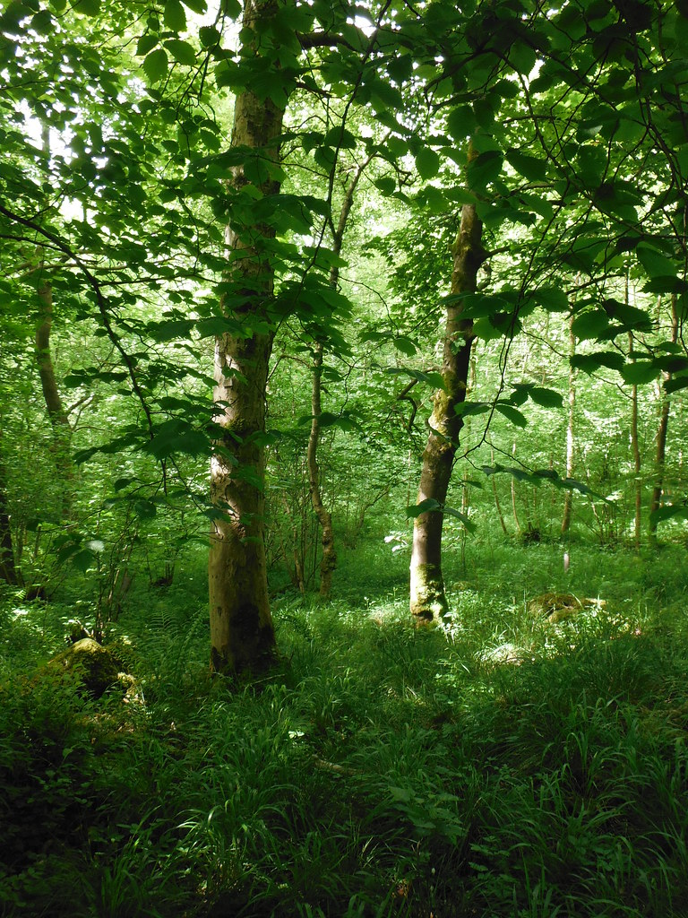 Grass Woods 2