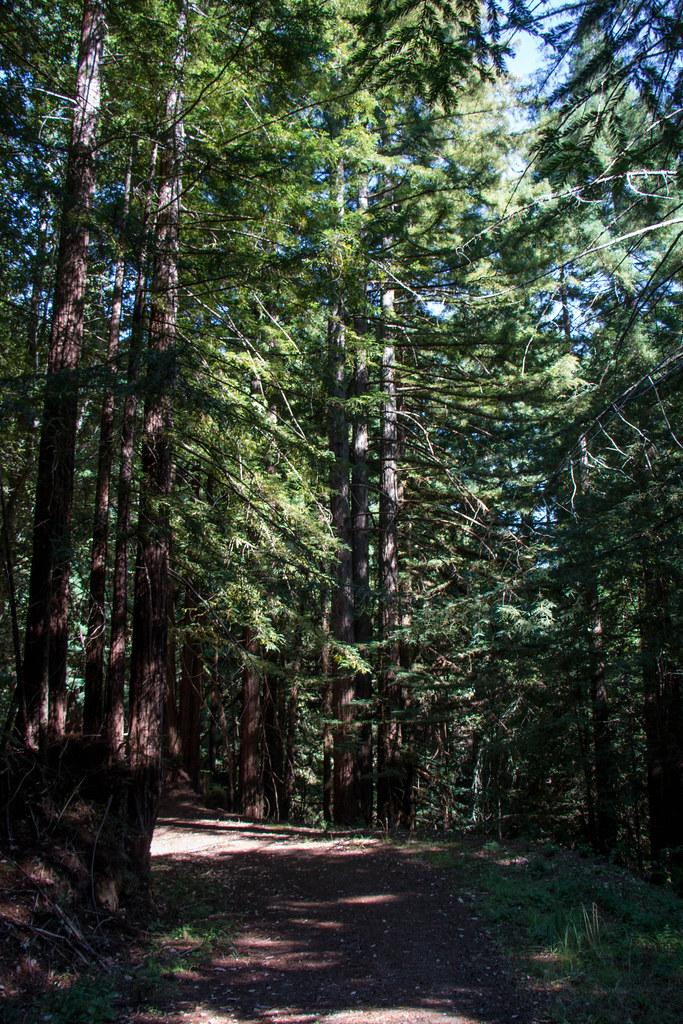 07.24. La Honda Creek Open Space
