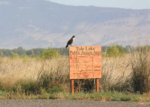 2688 tule lake sign nowak odfw a hawk rests on a sign for Oregon department of fish and wildlife jobs