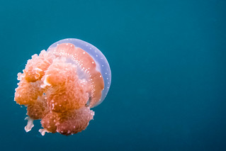 Lake jelly | by Photocritic.org