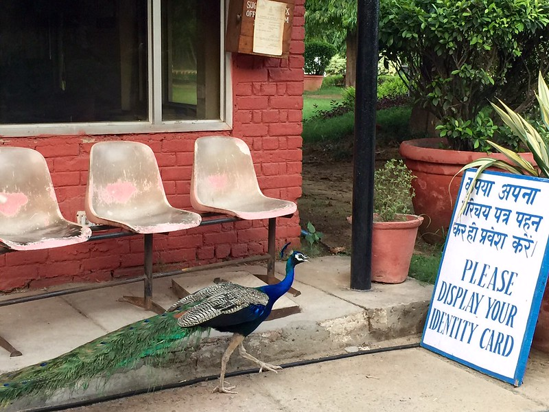 Photo Essay - The Peacock's Monsoon Plot, Mausam Bhawan