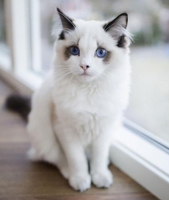 Плюшевый котенок - ПоЗиТиФфЧиК - сайт позитивного настроения!