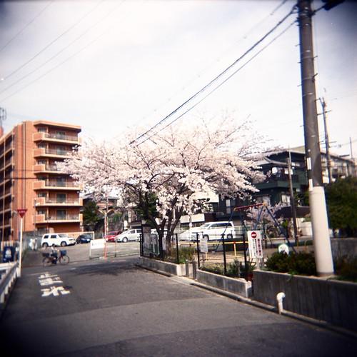 suburban blooms