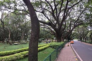 Bangalore - Cubbon Park drive