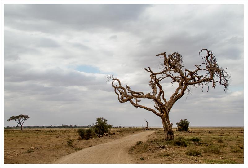 Amboseli-45